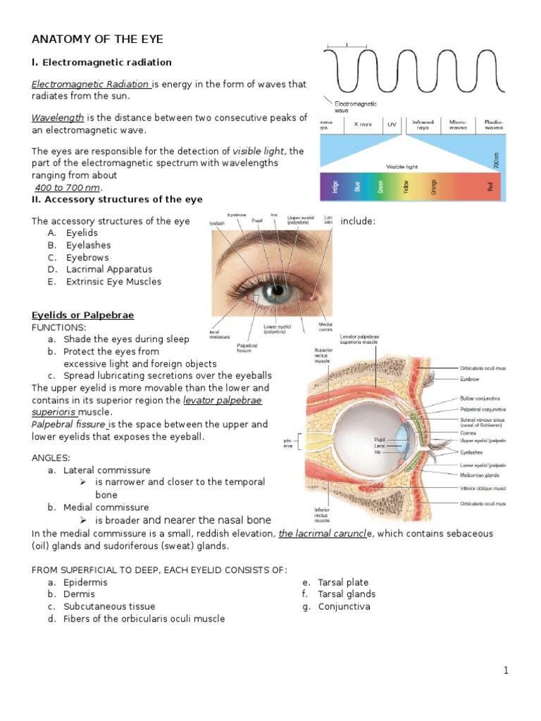 Anatomy and Physiology of the Eye   Human Eye   Retina