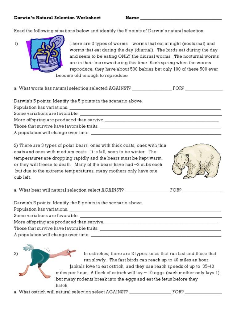worksheet Darwins Natural Selection Worksheet darwins natural selection worksheet bears