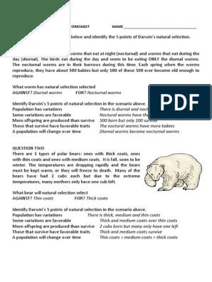 darwins natural selection worksheet key   Natural Selection ...