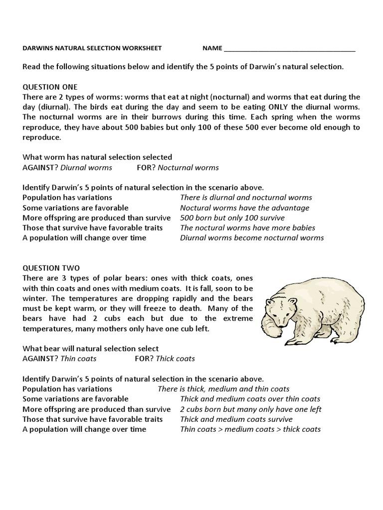 darwins natural selection worksheet key | Natural Selection ...