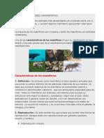 CARACTERISTICAS DE LOSMAMIFEROS Y OTROS