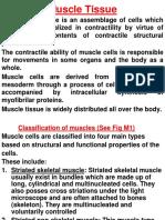 Muscle Tissue Slides C 20152016