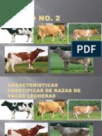 Caracteristicas fenotipicas Vacas lecheras 140923115607 Phpapp01