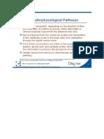 Pathophysiological Pathways of Vertigo