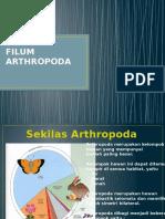 Filum Arthropoda