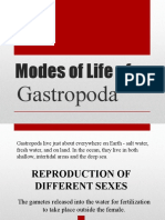 Modes of Life of GASTROPODA