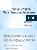 09 Recepción Celular.mecanismos Moleculares