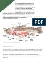 Sistem Ekskresi Pada Ikan