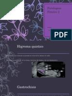 patologias fetales 2