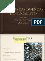 doenças-do-eucalipto