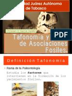 Tafonomía