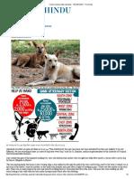 Canine Menace Bites Denizens - TELANGANA - The Hindu