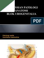 Asistensian Patologi Anatomi Urogenitalia 2012