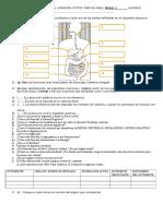 Evaluación Biología y Ambiente 2ª Digestivo Circulatorio