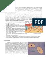 strukturfungsiorganelsel-140110071516-phpapp02