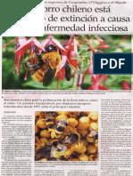 Abejorro Chileno - El Mercurio de Santiago - 03 Octubre 2012
