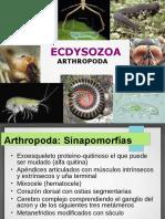 Arthropoda Clase 1