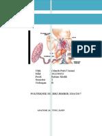 Anatomi Jantung Janin 1