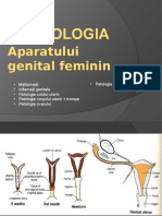 Genital Feminin