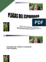 Plagas Del Esparrago