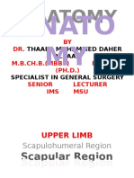 Anatomy Upper Limb Scapulohumera