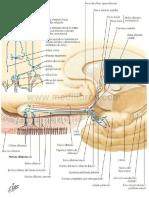 Nervio Olfatorio (I)