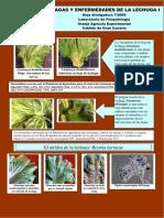 Las plagas y enfermedades de la lechuga.pdf
