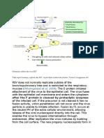 Mekanisme infeksi dari virus RSV.docx