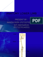Anatomy Lower Limb