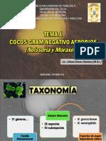 Cocos Gram Negativo