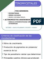 Tema m16 Orden Actinomycetales