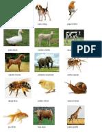 Animales en Igles y Español