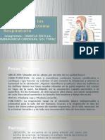Características Anatómicas y Fisiológicas de Los Órganos