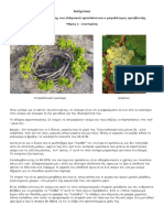 Asyrtiko_Santorinis.pdf