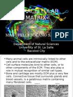 extracellularmatrix-111109073434-phpapp01