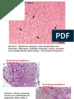 Patologia Oral. Md Falcone