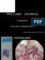 Pato II - Resumen Primer Parcial Labo