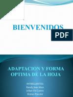Adaptacion y Forma Optima de La Hoja