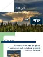 porumbul