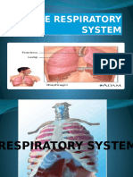 The Respiratory System (Intro)