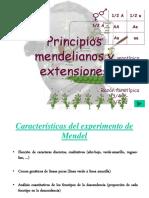 Mendel_prof.pdf