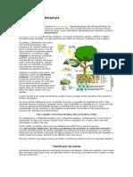 Reino Plantae e célula vegetal.docx
