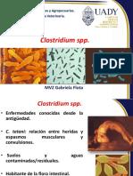 Clostridium 2016.pdf