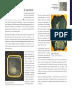 Daguerrotipo Postmortem