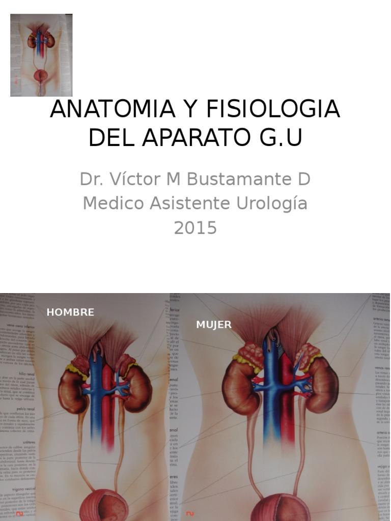 Anatomia y Fisiologia Del Aparato Gu 2015