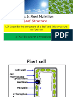 leaves and photosynthesis ppt