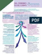 Brainy Hormones Infographic SP