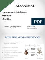 Reino animal, artropodos