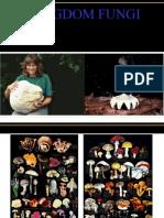 09 fungi