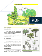 2.Árboles,_arbustos_o_hierbas